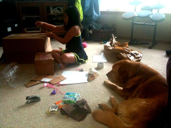 A Girl, A Box and Her Dog